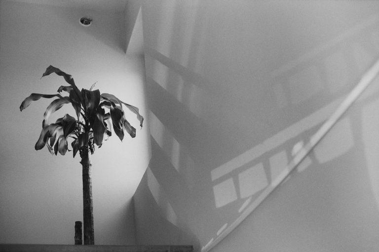 Nemesfény 2020 – online kiállítás
